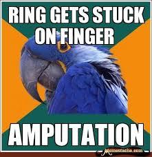 Paranoid Parrot Memes - 51 best paranoid parrot images on pinterest parrots social