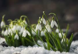 8 winter flowers to brighten your snowy garden bob vila