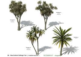 native new zealand plants list xfrogplants new zealand cabbage tree xfrog com