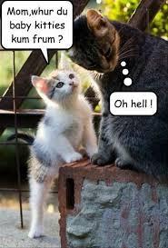 Hilarious Animal Memes - hilarious animal memes vol 1 myfunnypalace