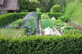 gap gardens vegetable garden surrounded with buxus hedging
