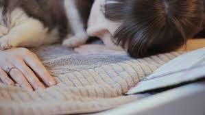 Sleeping On The Sofa Beagle Puppy Sleeping On The Sofa Stock Footage 8969647