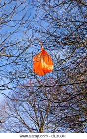 discarded plastic bag in the branches of a tree stock photo