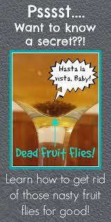 best 25 fruit fly traps ideas on pinterest best fruit fly trap