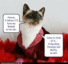 Rich Cat Meme - lifestyles of the rich and scandalous lolcats lol cat memes