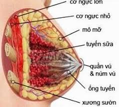 cho con bu lo hang cách ngừa viêm tuyến vú khi cho con bú