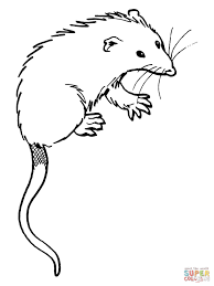 possum coloring pages getcoloringpages com