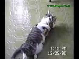 imagenes chistosas youtube videos chistosos de animales youtube