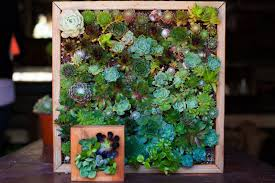 indoor garden ideas to green your apartment