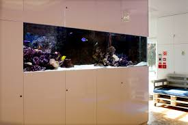 saltwater aquarium in the reception of a corporation adn