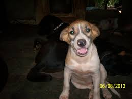 11 bluetick coonhound puppies in a bathtub dogs ready for adoption alabama angels dog rescue
