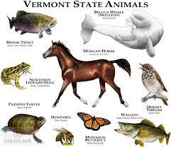 Vermont wildlife images Wildlife art state animals jpg