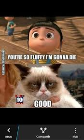 Angry Cat Meme Generator - ian somerhalder grumpy cat picture at sxsw 2013 twitter photo