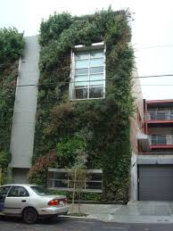 native plants san francisco nathan smith u0027s garden notes blog archive green wall san francisco