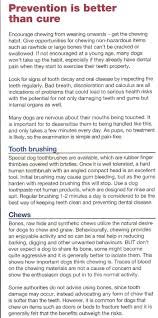 dental care for your greyhound rgt wolverhampton monmore green