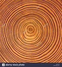 tree rings images images Tree growth rings stock photos tree growth rings stock images jpg
