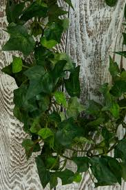 garland green variegated 6ft