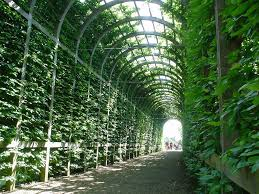 panoramio photo of trellis covered walkway