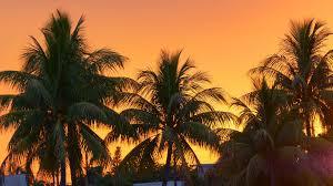 orange sunset sky palm tree view 4k miami usa stock