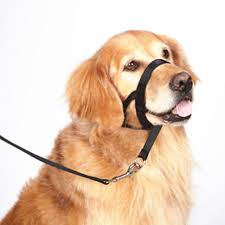 how to train dog to stop barking dog nylon adjustable muzzle with buckle and leash training dog