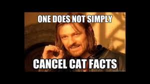 Cat Facts Meme - cat facts prank youtube