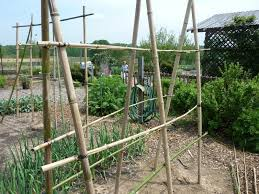 bamboo trellis ideas for peas beans raspberries and other plants