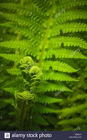 Free Picture Leaf Nature Fern Fern Leaf Nature Background ópteris Dryopteridaceae