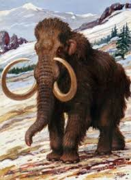 5 reasons opposed cloning woolly mammoths niche