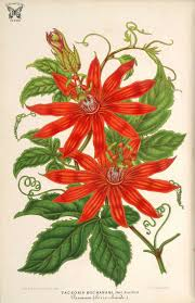 seed collection of australian native plants 3750 best art of plants images on pinterest botanical prints