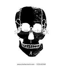 pics of a skull 65