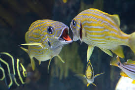 selecting the right species of catch the ornamental fish aquarium