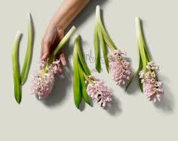 gardenbird flowers florist wilston brisbane