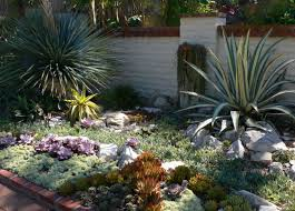 Cactus Garden Ideas Pictures Of Cactus Garden Ideas Png Hi Res 720p Hd