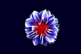 purple flower pictures free images on unsplash