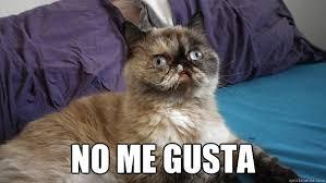No Gusta Meme - no me gusta no me gusta cat quickmeme