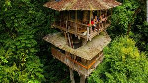 I Have Built A Treehouse - is the treehouse the of sustainable living cnn style