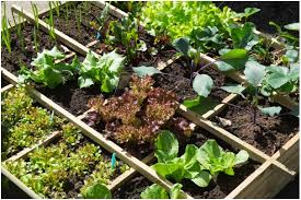 living off your own garden for beginners u2013 vegan sustainability