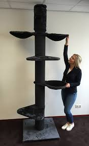 Unique Cat Furniture The Cat Tree Maine Coon Tower Plus Blackline Antracite Is An