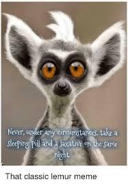 Lemur Meme - 25 best memes about lemur meme lemur memes