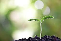 garten und landschaftsbau hamm garten und landschaftsbau floristik stadt hamm