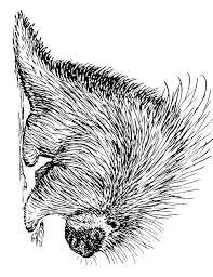 Coloriage porcépic  img 15937