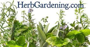 herb garden plants list home outdoor decoration