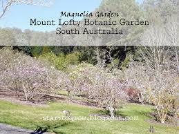 Mt Lofty Botanic Gardens Start To Grow Magnolia Season At Mount Lofty Botanic Garden