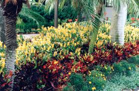 golden shrimp plants are mixed with crotons and california daisies