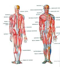 15 best study sheets images on pinterest human body and