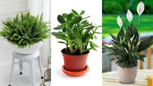 these plants bring luck wealth prosperity and health to home