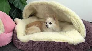 Homemade Dog Beds Diy Dog Bed Project How To Make A Homemade Dog Bed