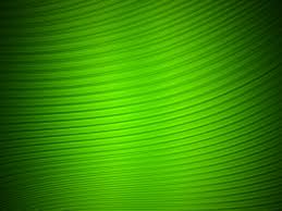 green hd desktop wallpaper wallpup com