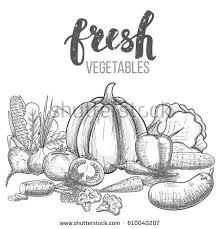 harvest vegetables basket hand drawn vector stock vector 725384521