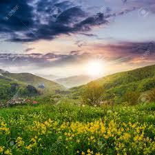 Flowers Near Me - summer landscape yellow flowers on the meadow hillside village
